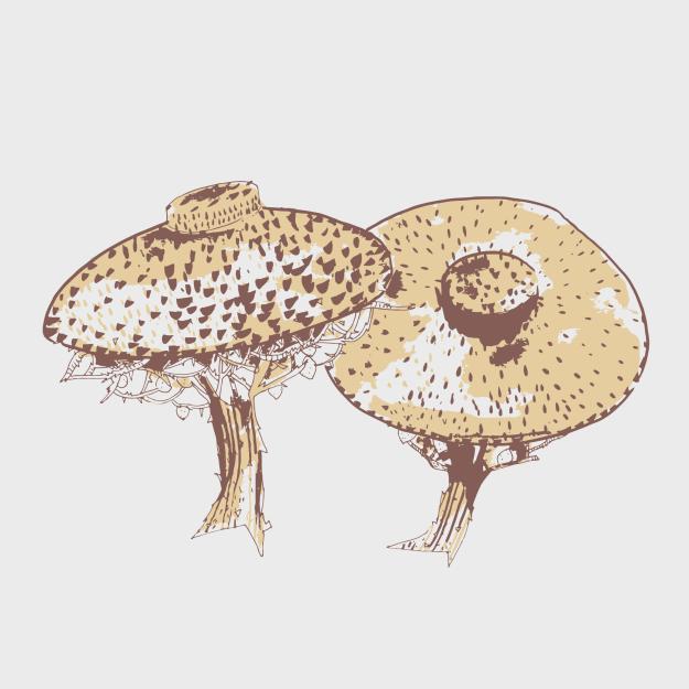 Hat Trees